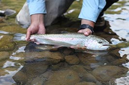 Rainbow Trout Fly Fishing in British Columbia