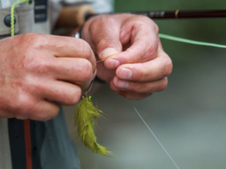 tying on a large fly