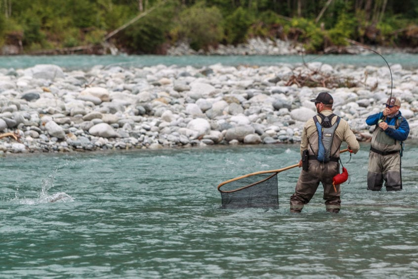 netting a large bull trout