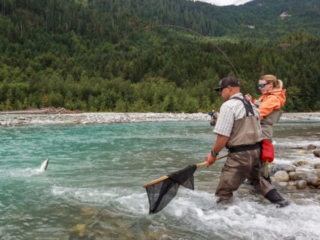 netting a bull trout