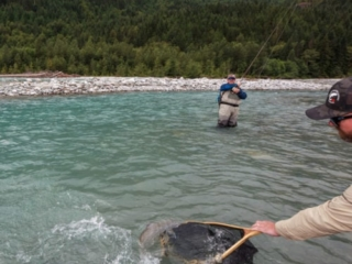 Netting a large bull trout for a client