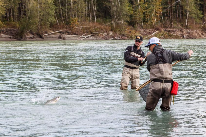 Angler catching pink salmon on the Squamish River