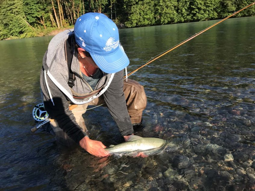 Squamish Pink Salmon