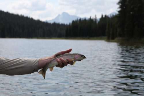 Fishing on the fly in Spruce Lake Protected Area, B.C.
