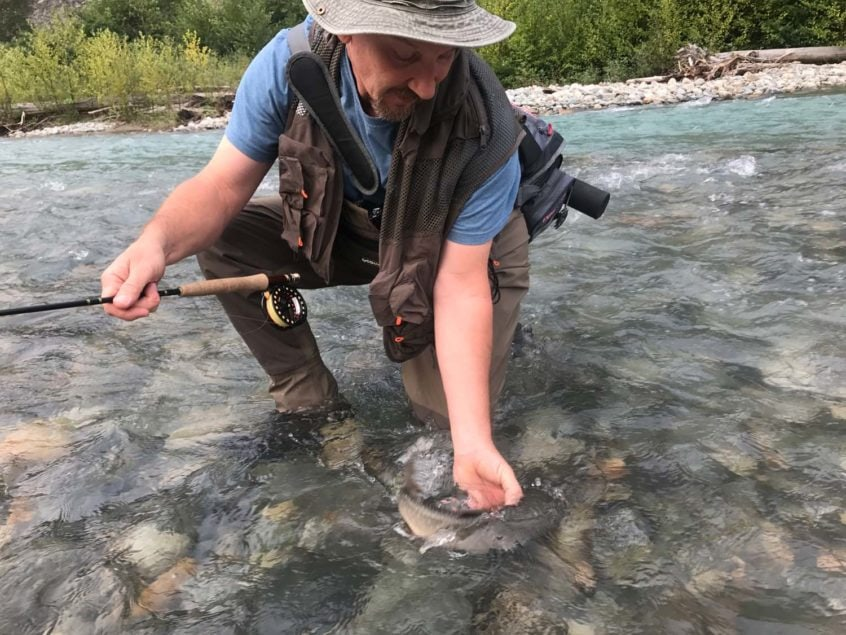 Releasing a bull trout on the Birkenhead River near Whistler