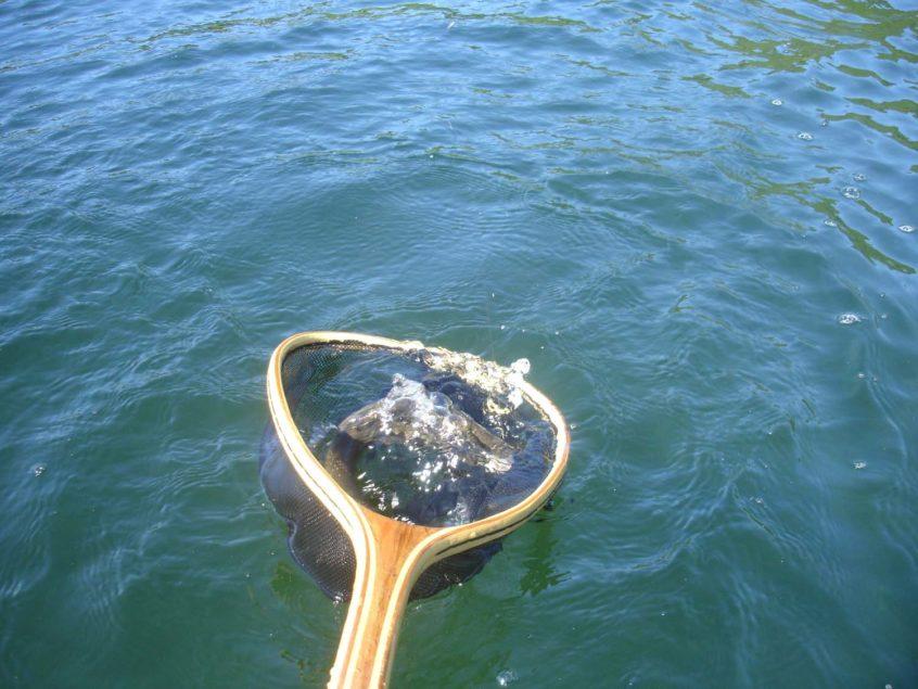 lake fly fishing near Whistler BC