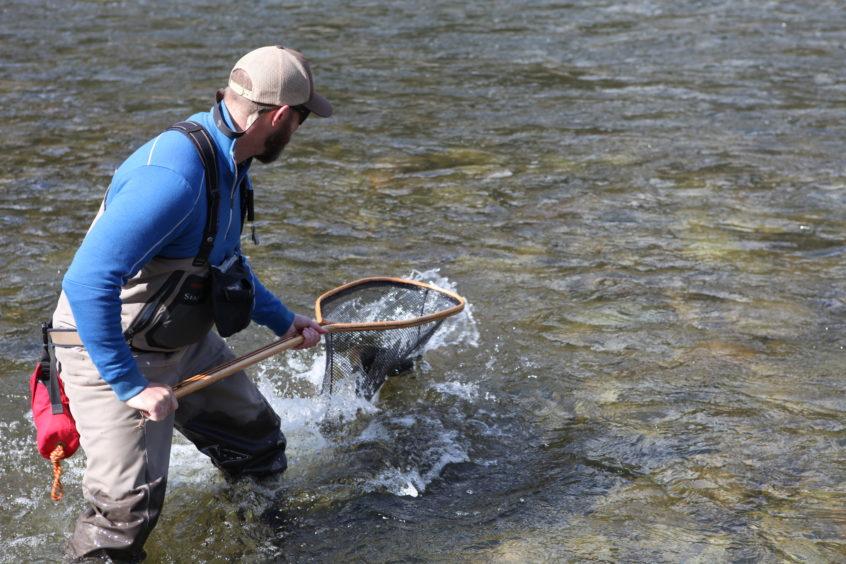 Netting a giant steelhead