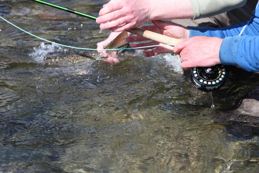Squamish Steelhead Released