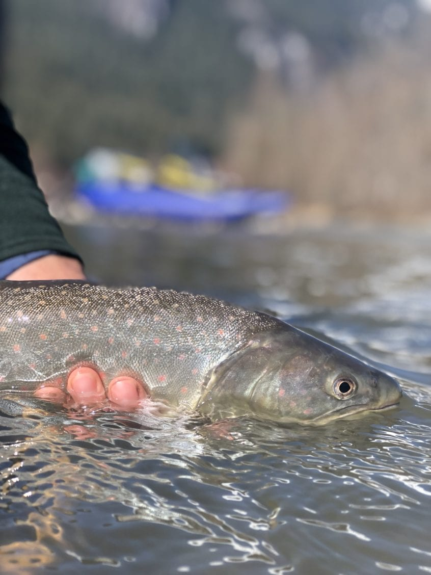 Float Trips for Bull Trout
