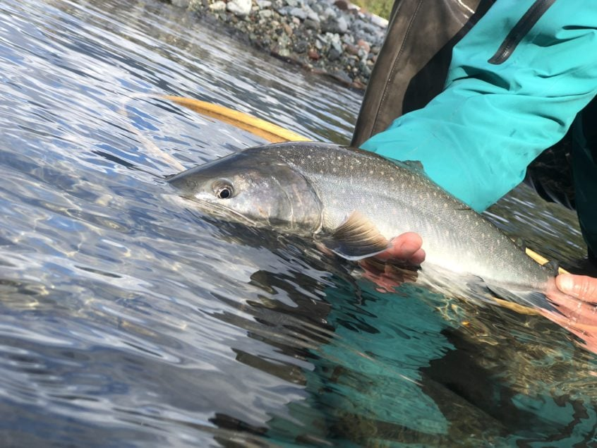 Bull Trout a river in Squamish